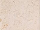 Limstone Crema Fossill